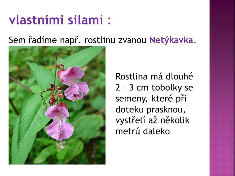 vlastními silami : Sem řadíme např.rostlinu zvanou Netýkavka.