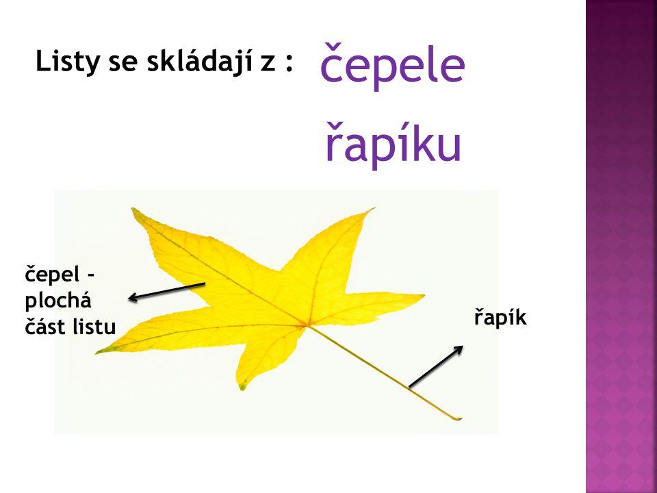 Listy se skládají z : čepele řapíku řapík čepel - plochá část listu