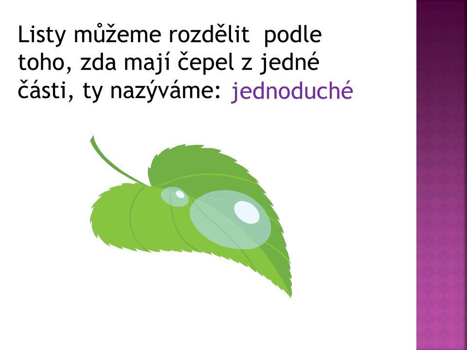 Listy, které mají čepel složenou z několika listů nazýváme : složené.