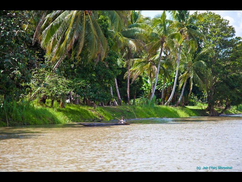 Téměř 70% území pokrývají neprostupné, bažinaté, deštné tropické pralesy.