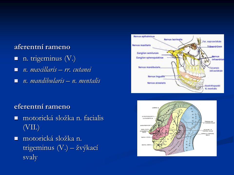 aferentní rameno n. trigeminus (V.) n. trigeminus (V.) n. maxillaris – rr. cutanei n. maxillaris – rr. cutanei n. mandibularis – n. mentalis n. mandib