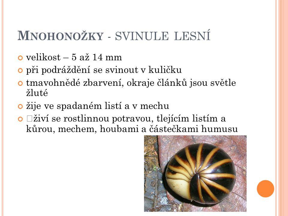 M NOHONOŽKY - M NOHONOŽKA ZEMNÍ je až 3 cm dlouhá, tenká a lesklá mnohonožka živí se rozkládajícími se rostlinami v nebezpečí se svinuje do spirály