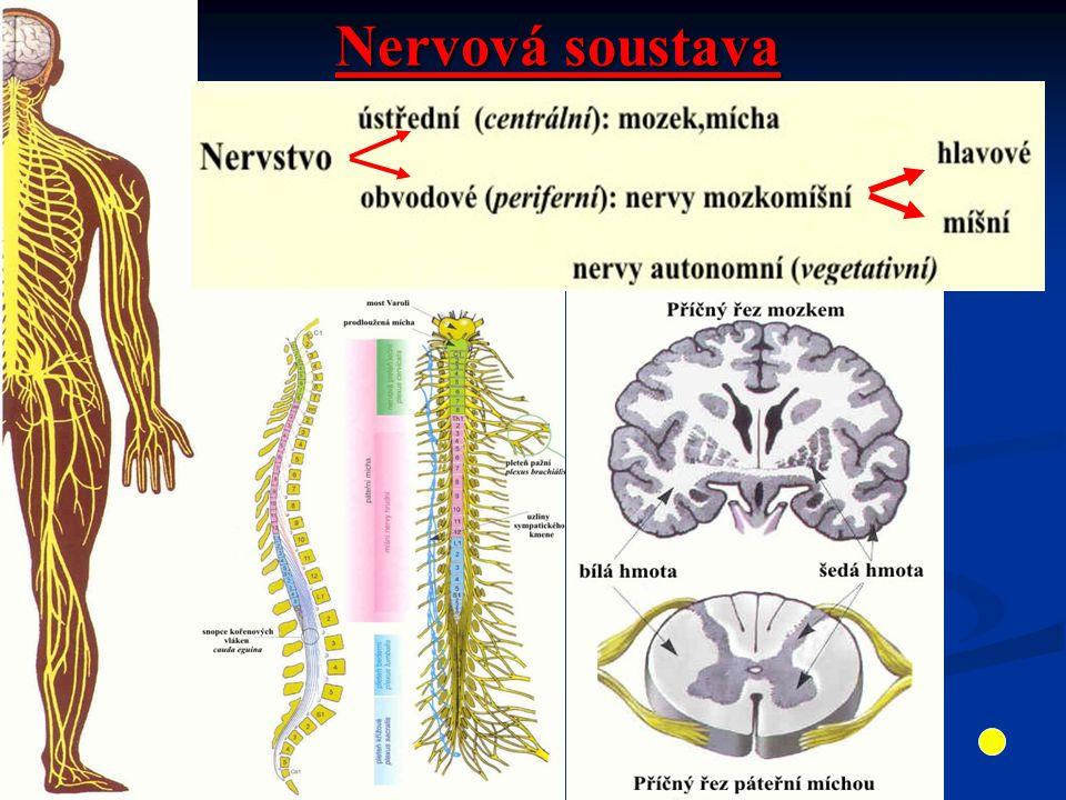 Nervová soustava