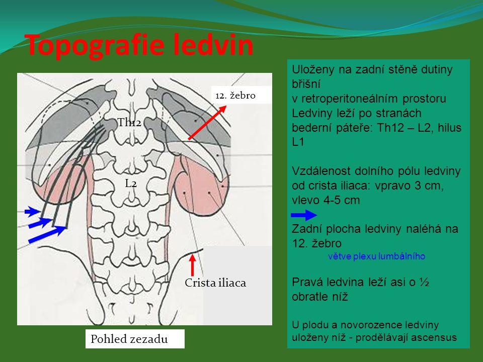 Uloženy na zadní stěně dutiny břišní v retroperitoneálním prostoru Ledviny leží po stranách bederní páteře: Th12 – L2, hilus L1 Vzdálenost dolního pól