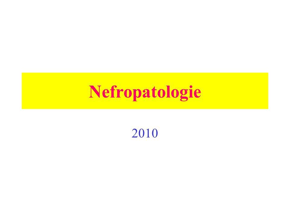 Dysplasie ledvin = produkt chybné diferenciace a morfogeneze, snížené větvení ureterálního pupence, ale schopného indukovat tvorbu nefronů.