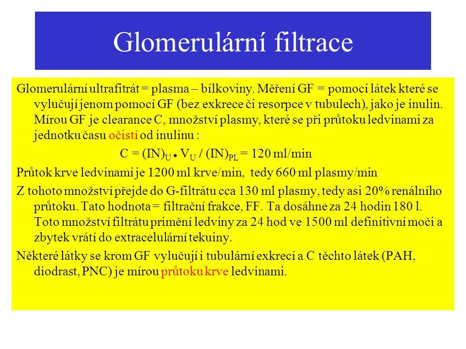 Glomerulární filtrace Glomerulární ultrafitrát = plasma – bílkoviny. Měření GF = pomocí látek které se vylučují jenom pomocí GF (bez exkrece či resorp
