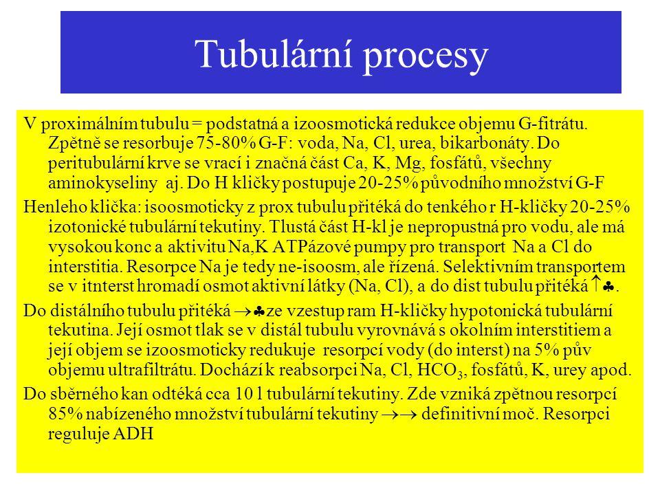 Tubulární procesy V proximálním tubulu = podstatná a izoosmotická redukce objemu G-fitrátu. Zpětně se resorbuje 75-80% G-F: voda, Na, Cl, urea, bikarb