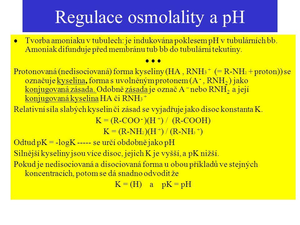 Regulace osmolality a pH  Tvorba amoniaku v tubulech: je indukována poklesem pH v tubulárních bb. Amoniak difunduje před membránu tub bb do tubulární