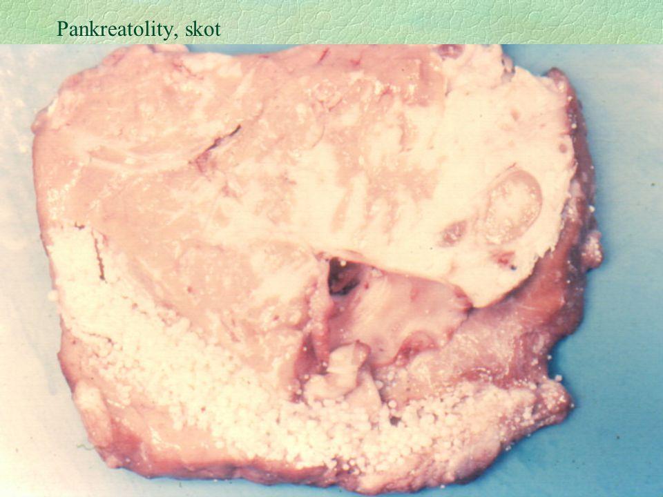 29 Pankreatolity, skot