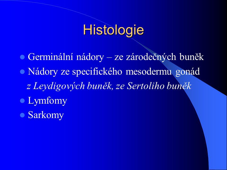 Histologie Germinální nádory – ze zárodečných buněk Nádory ze specifického mesodermu gonád z Leydigových buněk, ze Sertoliho buněk Lymfomy Sarkomy