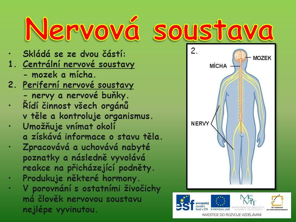 Skládá se ze dvou částí: 1.Centrální nervové soustavy - mozek a mícha. 2.Periferní nervové soustavy - nervy a nervové buňky. Řídí činnost všech orgánů