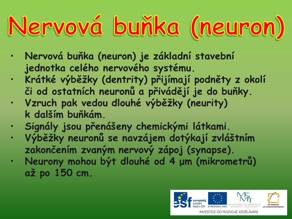 Nervová buňka (neuron) je základní stavební jednotka celého nervového systému. Krátké výběžky (dentrity) přijímají podněty z okolí či od ostatních neu