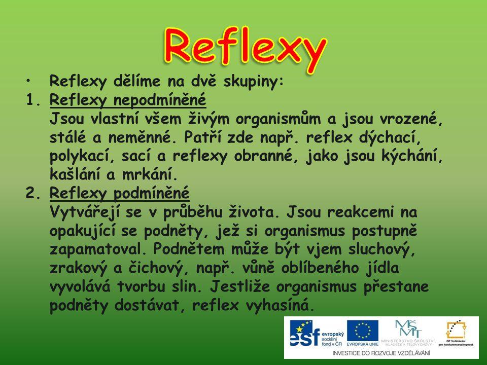 Reflexy dělíme na dvě skupiny: 1.Reflexy nepodmíněné Jsou vlastní všem živým organismům a jsou vrozené, stálé a neměnné. Patří zde např. reflex dýchac