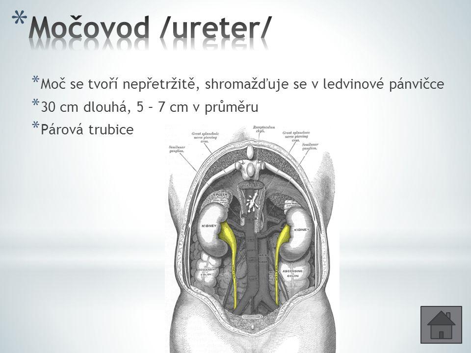 * Kapacita asi 700 ml * Při náplni asi 400 ml → rytmické stahy hladké svaloviny močového měchýře - nucení na moč / lze částečné potlačit/ * Vyprázdnění – močení /mikce/ - reflexní děj /centrum v křížové části míchy/; působení hladkých svalů měchýře a břišního lisu Přechodný epitel Jaký epitel vystýlá moč.