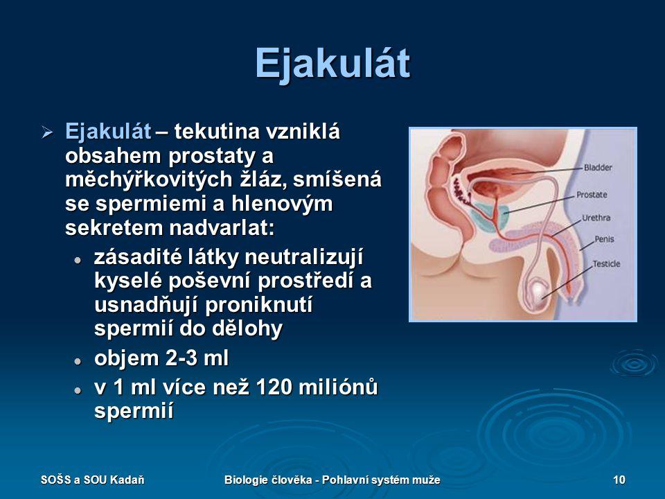 SOŠS a SOU KadaňBiologie člověka - Pohlavní systém muže10 Ejakulát  Ejakulát – tekutina vzniklá obsahem prostaty a měchýřkovitých žláz, smíšená se sp