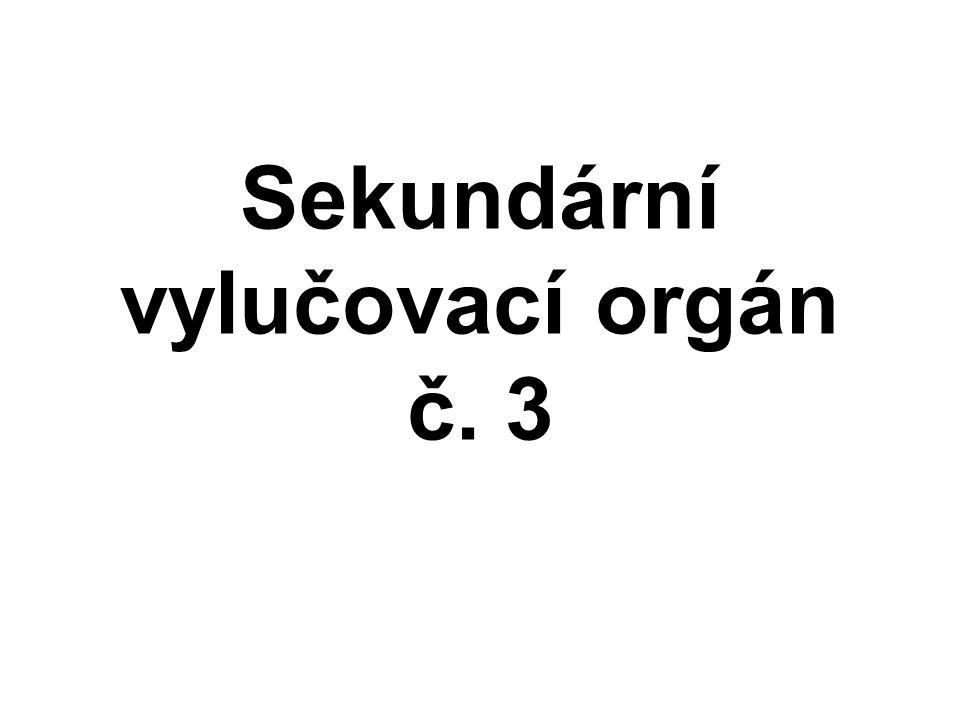 Sekundární vylučovací orgán č. 3