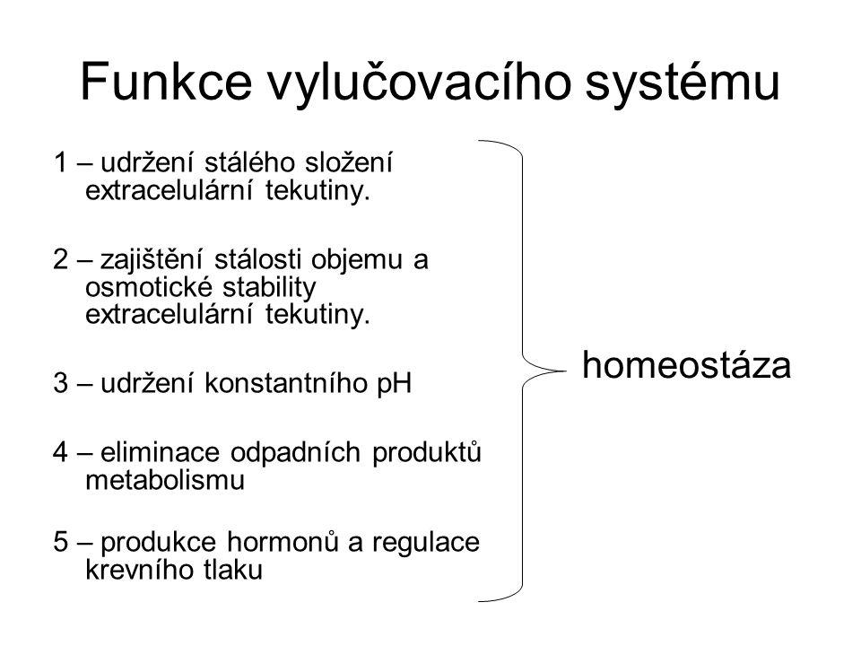 Funkce vylučovacího systému 1 – udržení stálého složení extracelulární tekutiny. 2 – zajištění stálosti objemu a osmotické stability extracelulární te