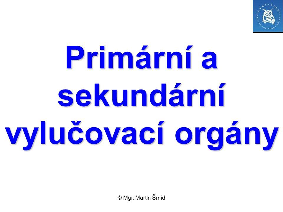© Mgr. Martin Šmíd Primární a sekundární vylučovací orgány