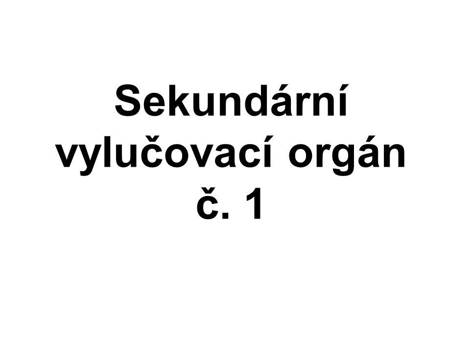 Sekundární vylučovací orgán č. 1
