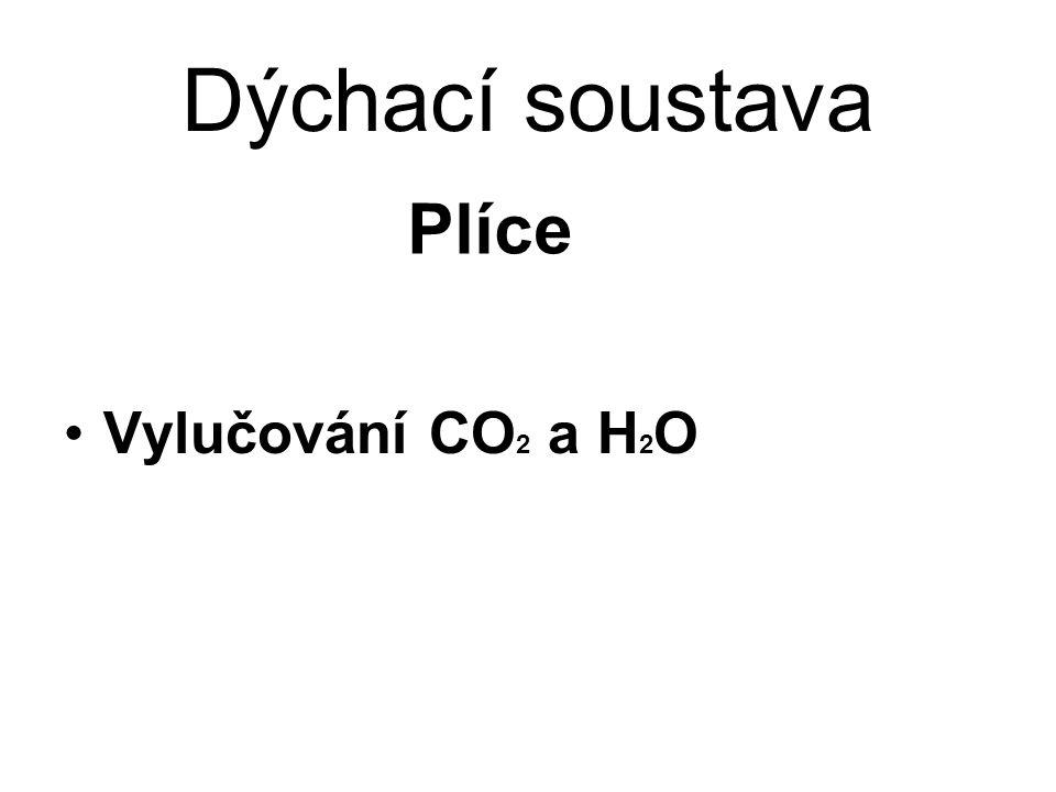 Dýchací soustava Vylučování CO 2 a H 2 O Plíce