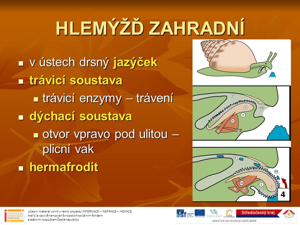 HLEMÝŽĎ ZAHRADNÍ v ústech drsný jazýček v ústech drsný jazýček trávicí soustava trávicí soustava trávicí enzymy – trávení trávicí enzymy – trávení dýc