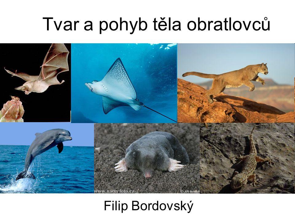 Tvar a pohyb těla obratlovců Filip Bordovský