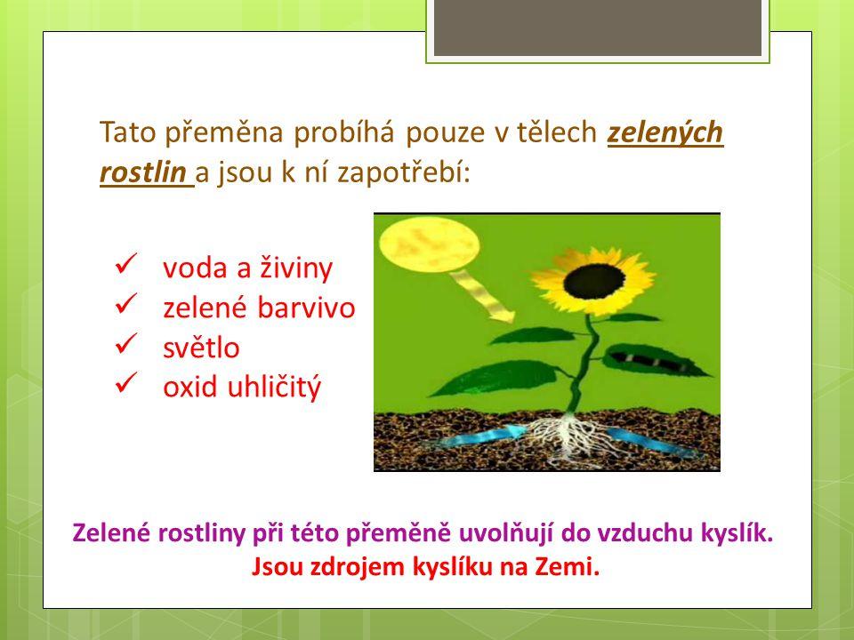 Tato přeměna probíhá pouze v tělech zelených rostlin a jsou k ní zapotřebí: voda a živiny zelené barvivo světlo oxid uhličitý Zelené rostliny při této přeměně uvolňují do vzduchu kyslík.