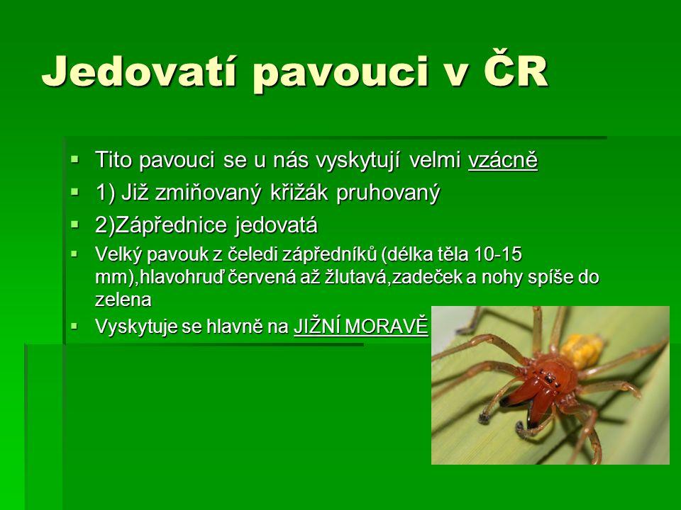 Jedovatí pavouci v ČR  Tito pavouci se u nás vyskytují velmi vzácně  1) Již zmiňovaný křižák pruhovaný  2)Zápřednice jedovatá  Velký pavouk z čele