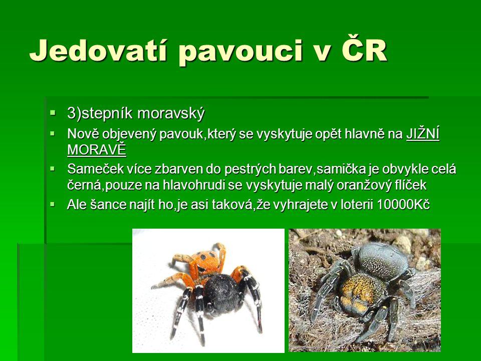 Jedovatí pavouci v ČR  3)stepník moravský  Nově objevený pavouk,který se vyskytuje opět hlavně na JIŽNÍ MORAVĚ  Sameček více zbarven do pestrých ba