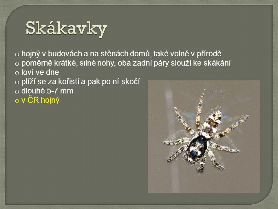 Vodouch o jediný známý vodní pavouk o vyskytuje ve stojatých vodách zarostlých vegetací o neumí přijímat rozpuštěný kyslík ve vodě, pod vodou si tento pavouk zhotovuje prostorný vzduchový zvon, ve kterém probíhají veškeré životní pochody pavouka ( příjem potravy, svlékání, páření a kladení vajíček) o samečci (10-15 mm) jsou větší než samičky (8-9 mm) o vodouch stříbřitý je nejjedovatější pavouk České republiky