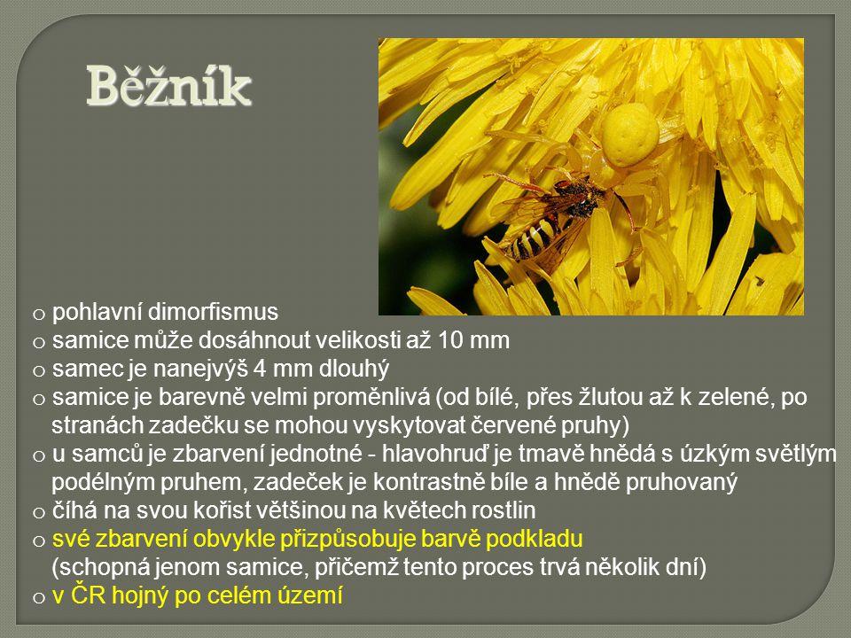 Slí ď ák tatarský o je největší evropský pavouk o samice dosahuje velikosti téměř 40 mm o v polovině dvacátého století u nás úplně vymizel a byl dokonce považován za regionálně vyhynulého o od roku 2007 se opět začal objevovat na více místech na střední a jižní Moravě o vyhrabává si až 30 cm hlubokou svislou zemní noru, jejíž vnitřní stěnu vystýlá pavučinou o přes den se pavouk zdržuje ve své noře, večer jí opouští a vydává se na lov o člověku je přes svou velikost naprosto neškodný