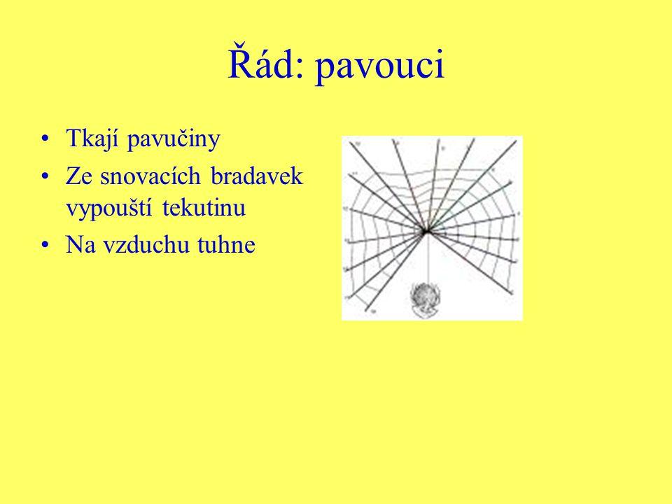 Řád: pavouci Tkají pavučiny Ze snovacích bradavek vypouští tekutinu Na vzduchu tuhne