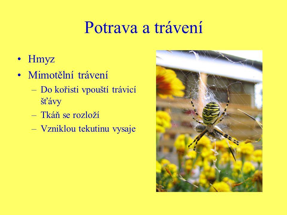 Potrava a trávení Hmyz Mimotělní trávení –Do kořisti vpouští trávicí šťávy –Tkáň se rozloží –Vzniklou tekutinu vysaje