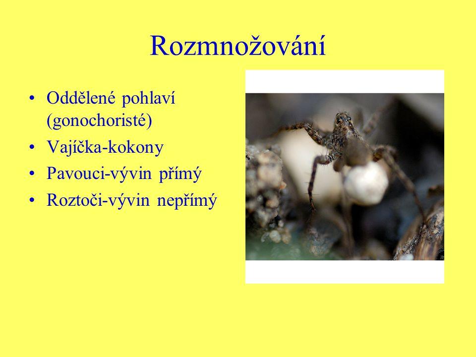 Rozmnožování Oddělené pohlaví (gonochoristé) Vajíčka-kokony Pavouci-vývin přímý Roztoči-vývin nepřímý