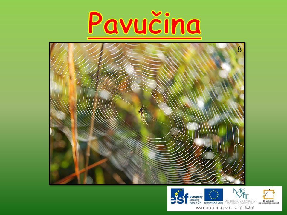 Sklípkani Největší pavouci žijící na Zemi.Mohou měřit až 12 cm.