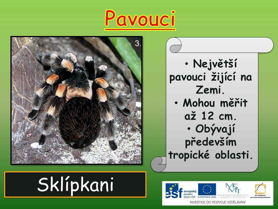Sklípkani Největší pavouci žijící na Zemi. Mohou měřit až 12 cm. Obývají především tropické oblasti. 3.