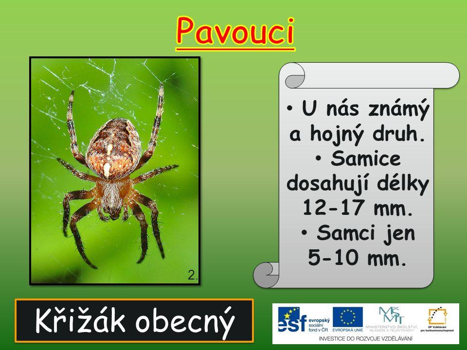 Křižák obecný U nás známý a hojný druh. Samice dosahují délky 12-17 mm. Samci jen 5-10 mm. 2.