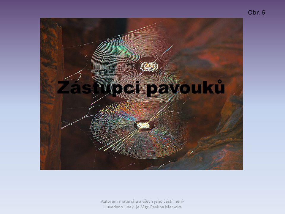 Zástupci pavouků Obr. 6 Autorem materiálu a všech jeho částí, není- li uvedeno jinak, je Mgr. Pavlína Marková