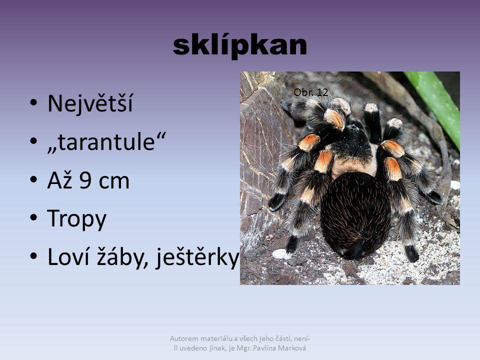 """sklípkan Největší """"tarantule"""" Až 9 cm Tropy Loví žáby, ještěrky Obr. 12 Autorem materiálu a všech jeho částí, není- li uvedeno jinak, je Mgr. Pavlína"""