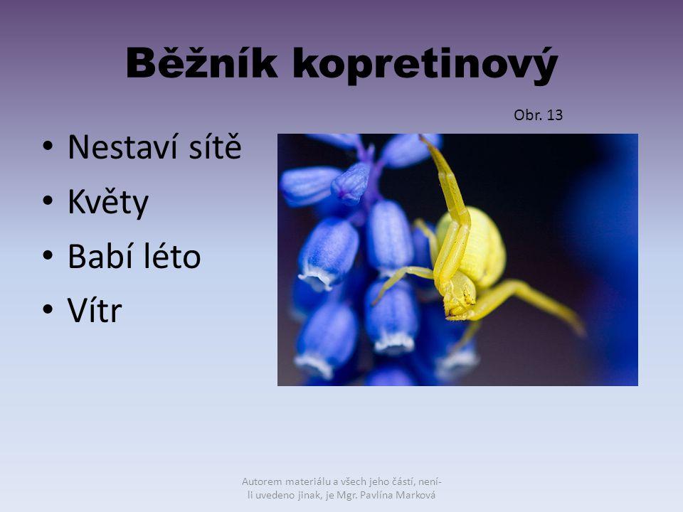 Běžník kopretinový Nestaví sítě Květy Babí léto Vítr Obr. 13 Autorem materiálu a všech jeho částí, není- li uvedeno jinak, je Mgr. Pavlína Marková