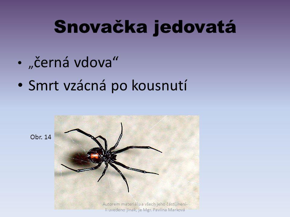"""Snovačka jedovatá """" černá vdova"""" Smrt vzácná po kousnutí Obr. 14 Autorem materiálu a všech jeho částí, není- li uvedeno jinak, je Mgr. Pavlína Marková"""