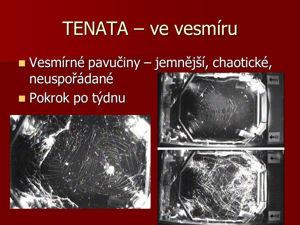 TENATA – ve vesmíru Vesmírné pavučiny – jemnější, chaotické, neuspořádané Vesmírné pavučiny – jemnější, chaotické, neuspořádané Pokrok po týdnu Pokrok po týdnu