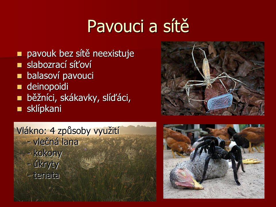 Pavouci a sítě pavouk bez sítě neexistuje pavouk bez sítě neexistuje slabozrací síťoví slabozrací síťoví balasoví pavouci balasoví pavouci deinopoidi deinopoidi běžníci, skákavky, slíďáci, běžníci, skákavky, slíďáci, sklípkani sklípkani Vlákno: 4 způsoby využití - vlečná lana - kokony - úkryty - tenata