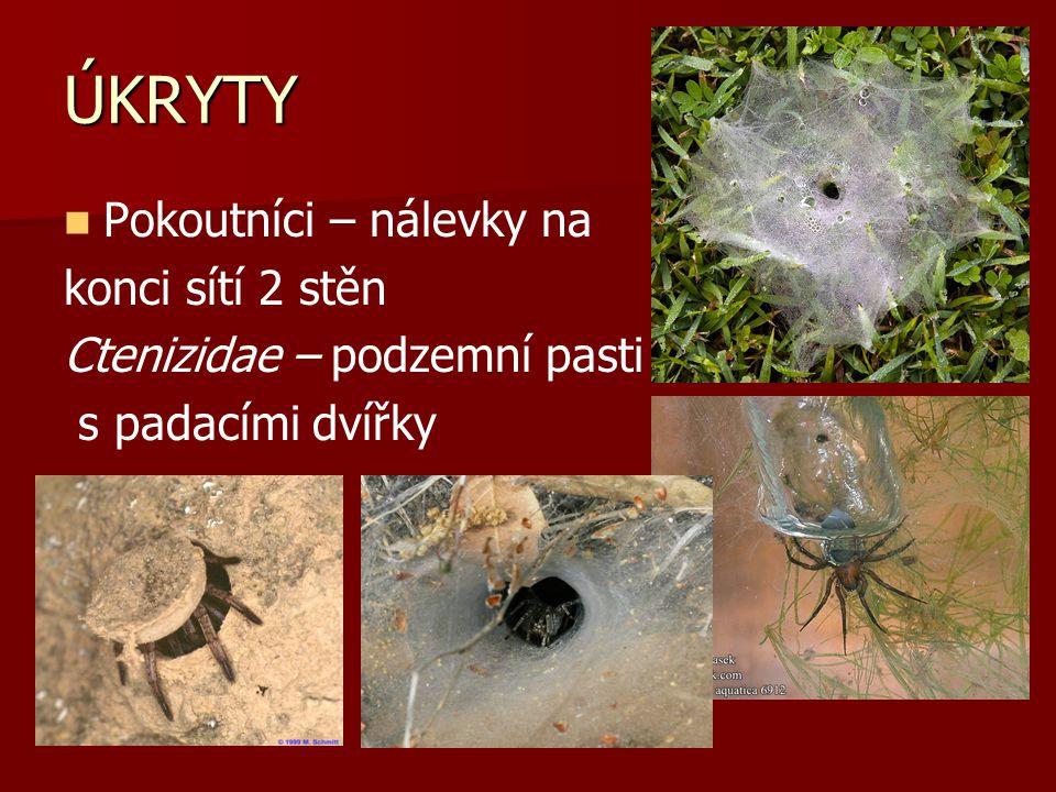 ÚKRYTY Pokoutníci – nálevky na konci sítí 2 stěn Ctenizidae – podzemní pasti s padacími dvířky