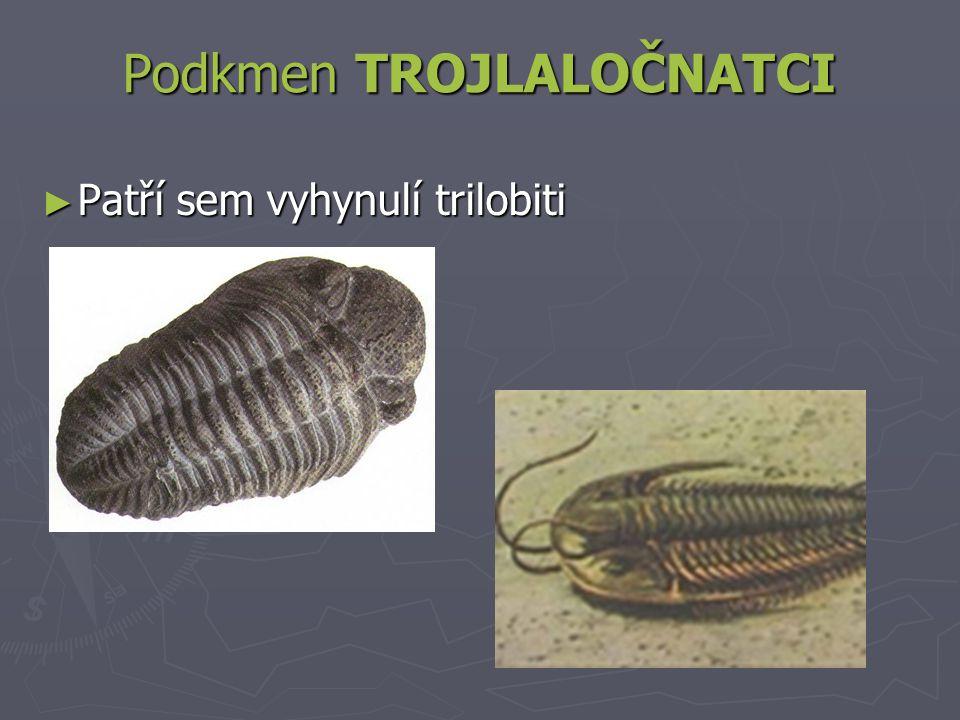 Podkmen TROJLALOČNATCI ► Patří sem vyhynulí trilobiti