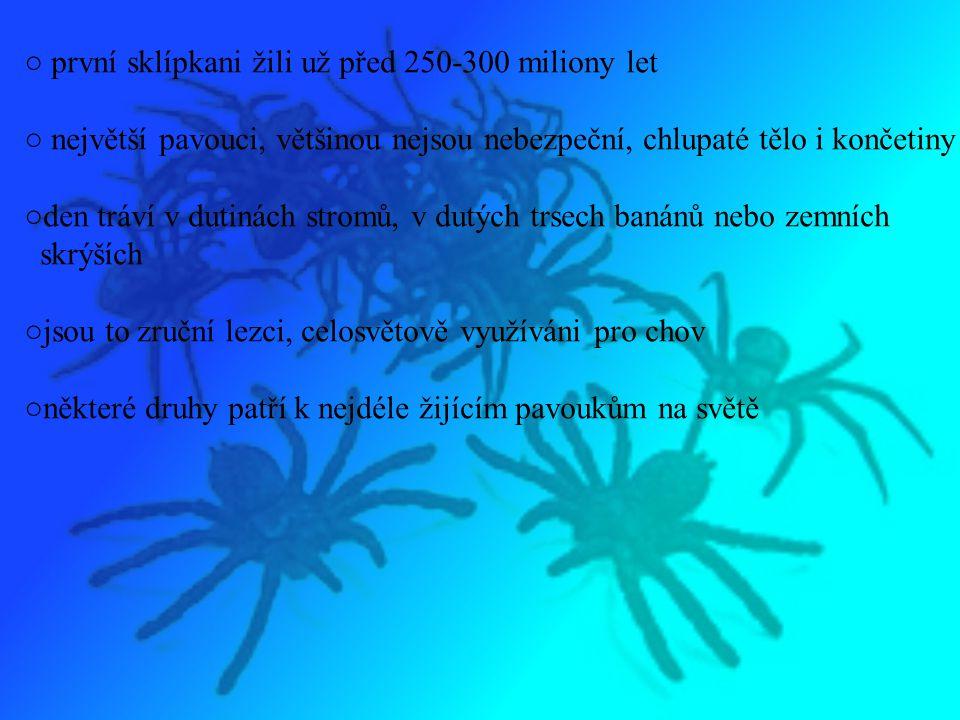 Anatomie ○tělo pavouka se dělí na dvě základní části: hlavohruď, na níž zřetelně rozlišíme šest párů končetin, a zadeček, který u sklípkanů není článkovaný, obě tyto části jsou spojeny tenkou stopkou ○hlavohruď nese na hřbetní straně kompaktní štít ○nápadným útvarem je jamka, neboli vtisk, který vbíhá dovnitř těla pevným trnem, sloužícím pro úpon mohutných svalů savého žaludku ○dále si můžeme v přední části všimnout drobné vyvýšeniny, na níž jsou uloženy čtyři páry jednoduchých očí, jejich zorná pole se překrývají a pavouk tak registruje zrakové podněty ve značně širokém úhlu ○na spodní straně hlavohrudi najdeme mezi kyčlemi nečlánkovanou pevnou prsní destičku zvanou prsní štít