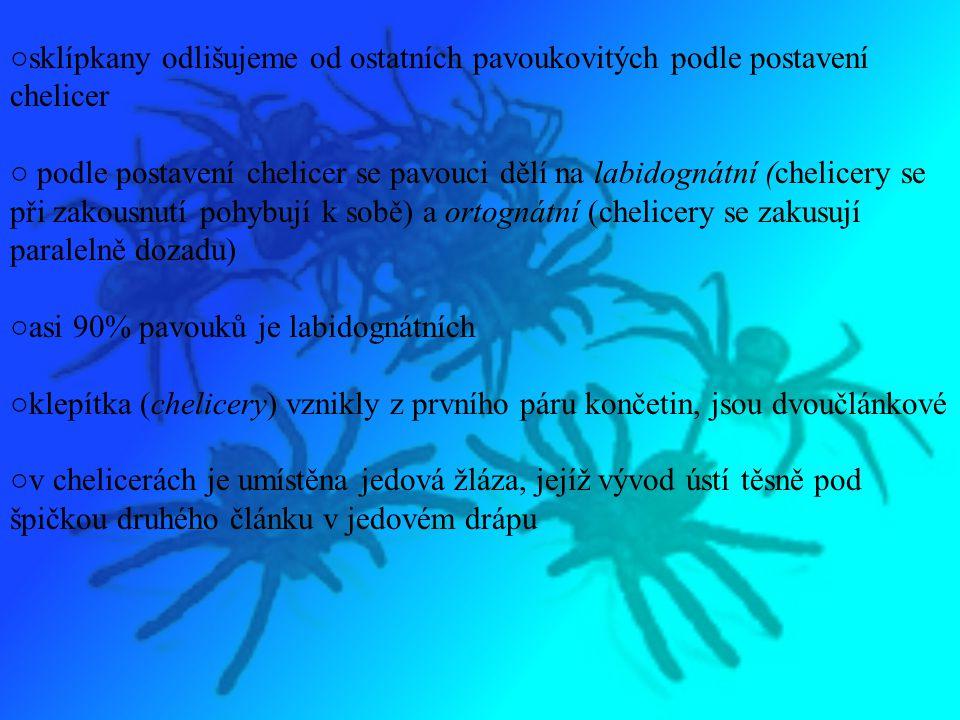 ○druhý pár končetin se přeměnil v makadla (pedipalpy), která mohou mít u pavoukovců nejrůznější tvar (např.