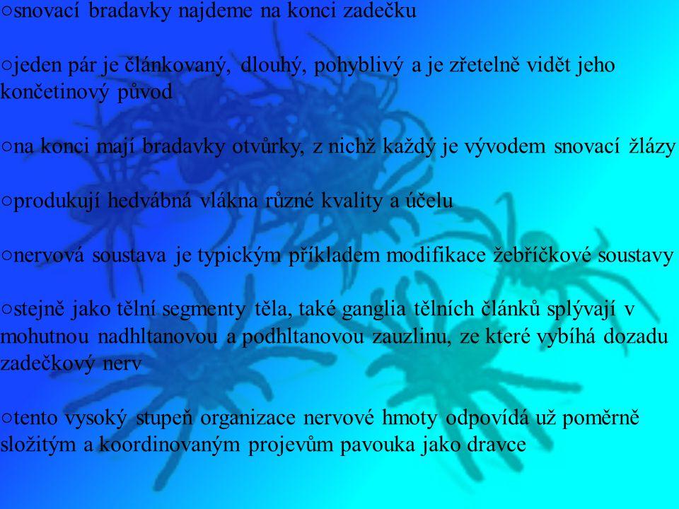 ○ze smyslových orgánů má sklípkan tyto: zrak, hmat, čich a sluch ○tato čidla mají charakter brv a tuhých chloupků, jejichž podrážděním se vzruchy přenášejí k nervové tkáni ○čichové orgány jsou umístěny na chodidlech, sluchové a hmatové chloupky jsou po celém těle ○stridulační orgány najdeme na bazálních článcích chelicer ○zvuk je vydáván třením bazálních článků pedipalp o chelicery ○trávení je mimotělní, probíhá za pomoci trávicích enzymů, které rozpouštějí svalovinu a vnitřní orgány kořisti