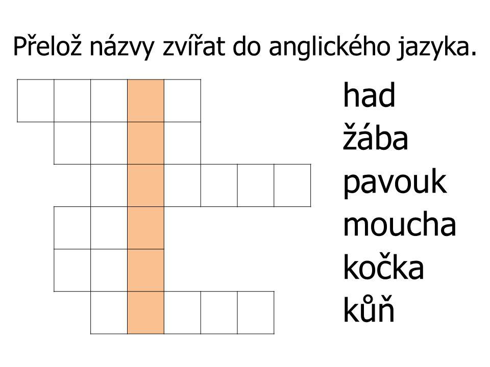 Přelož názvy zvířat do anglického jazyka. had žába pavouk moucha kočka kůň