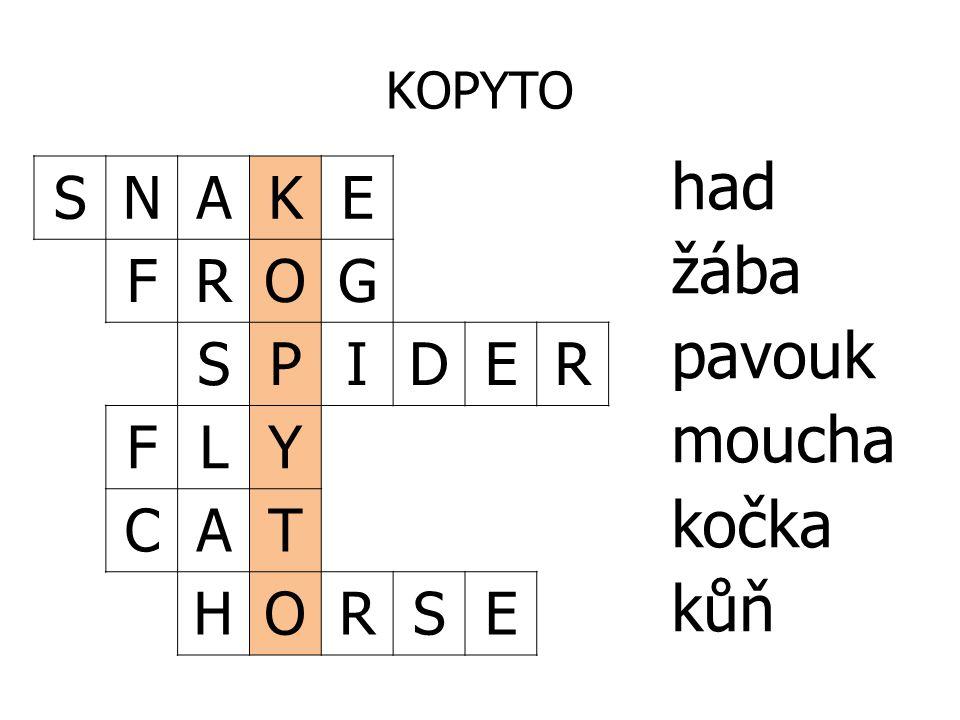 KOPYTO SNAKE FROG SPIDER FLY CAT HORSE had žába pavouk moucha kočka kůň